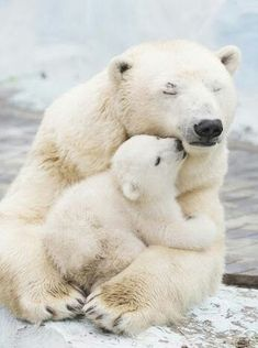 Save the polar bears from climate change! Act now!!