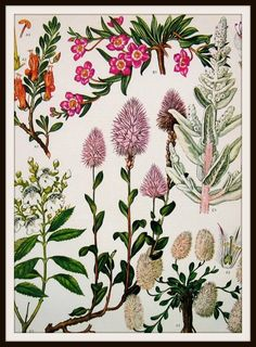 """Beautiful Vintage Botanical art print Art Image Wall Decor Unframed Print is Unframed 8.5 x 11"""" Ready for framing . Professionally printed on medium weight cardstock"""
