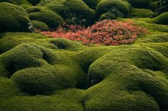 Among the Moss Iceland photo Landscape Photography, Nature Photography, Places To Travel, Places To Visit, Iceland Photos, Abandoned Buildings, Travel Agency, Summer Travel, Lava