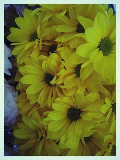 Yellow in autumn