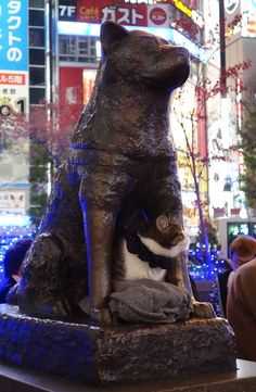 I got lucky enough to see Hachiko with his precious friend yesterday!