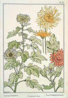 stilllifequickheart:    M. P. Verneuil  Chrysanthemum  1896