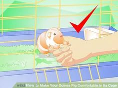 Image titled Make Your Guinea Pig Comfortable in Its Cage Step 15