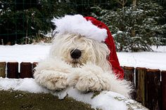 Priceless. Furry and Festive. Woof, woof.