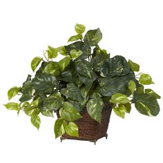 Nearly Pothos with Coiled Rope Planter Silk Plant