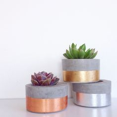 Design Twins' new pots are perfect for indoor plant trend