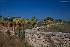 Formentera Rural- Mediterranea Pitiusa la Naviera de Formentera