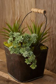 Sedum Pick with 30 Leaves Dusty Green Succulent Pick Sedum Succulents In Containers, Cacti And Succulents, Planting Succulents, Planting Flowers, Succulent Gardening, Succulent Terrarium, Container Gardening, Organic Gardening, Succulent Care