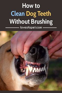 How to Clean Dog Teeth Without Brushing.  Brushing your dog's teeth is never a bad idea. But when your dog resists brushing, then you should try out some other dog brushing teeth alternatives.  #CleanDogTeeth #dogcare #DogCleaning #DogTeeth