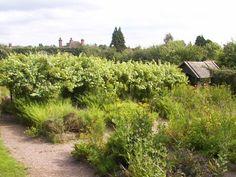 Stafford Castle Medieval Herb Garden