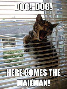 Dog Dog - cat meme - http://www.jokideo.com/