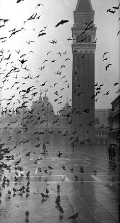 Pigeons flocking above Piazza San Marco on a rainy day, Venice (1952), Italy | Dmitri Kessel - Photography