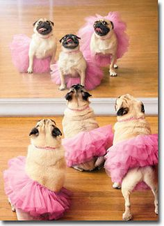 Ballerina Pugs Funny Dog Birthday Card - Greeting Card by Avanti Press in Home & Garden | eBay