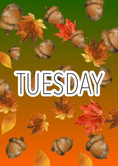 Thanks M, I like Tuesday too! Happy Tuesday Morning, Happy Tuesday Quotes, Good Morning, Friday Saturday Sunday, Monday Tuesday Wednesday, Tuesday Greetings, Tuesday Images, Evening Greetings, Days Of Week