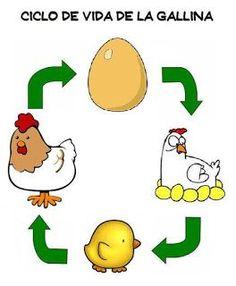 Spanish activity for kids: Chicken-and-egg cycle from Menta M�s Chocolate - recursos para educaci�n infantil, ciclo de vida de la gallina