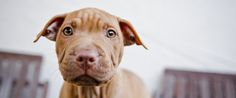 These States Won't Allow Your Dog To Be Seized Because Of His Breed