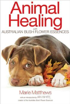 Animal Healing With Australian Bush Flower Essences (Paperback)