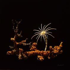 bone flower from Wunderkammer Rudolph Art Object, Curiosity, Mammals, Skeleton, Contemporary Art, Goal, Strength, Objects, Cabinet