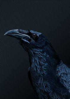 El inteligente cuervo by retamal1990 on deviantART