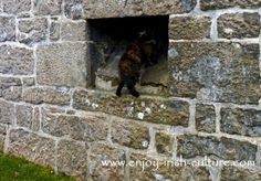 The hole in the wall where toilet waste from the garderobes once emerged, Annaghdown Castle, www.enjoy-irish-culture.com