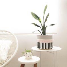 Bom dia! Nova moradora lindíssima! A Strelitzia é uma daquelas plantas que eu torcia o nariz e achava super sem graça, mas aí foi só…