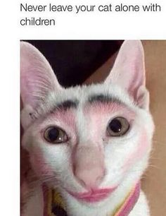 Omg hilarious  !! I can't stop laughing at this poor cat lol