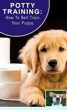 Dog Breed Cane Corso Dogtraining And Potty Training Dog Relapse