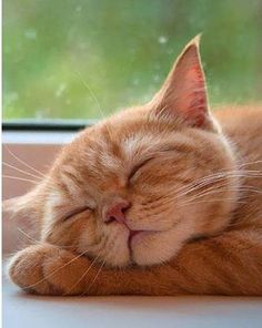Oh those cat naps. Cats are wonderful at sleeping.                                                                                                                                                                                 More