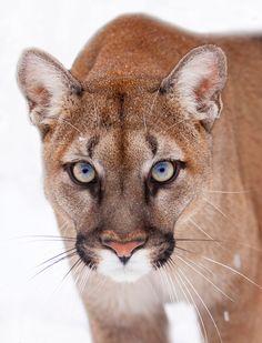 30 Amazing Animal Eyes Photography ~ Wonarts