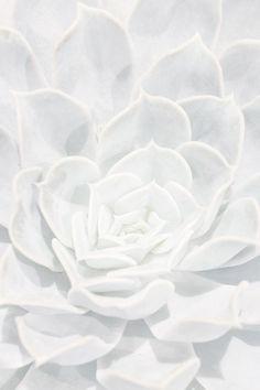 white.quenalbertini: Design Crush | Margaux Roy Photography