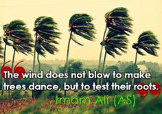 The wind does not blow to make trees dance, but to test their roots | Imam Ali (as)
