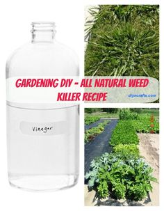 Gardening DIY – A Safe and All-Natural Way to Get Rid Of Garden Weeds - http://www.diyncrafts.com/929/home/a-safe-and-all-natural-way-to-rid-your-garden-of-weeds-using-vinegar