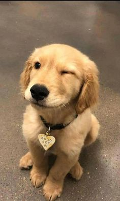 Stunning hand-crafted Golden Retriever accessories and jewelry can be found at th . - Stunning hand-crafted Golden Re. Baby Animals Super Cute, Super Cute Puppies, Cute Little Puppies, Cute Little Animals, Cute Dogs And Puppies, Cute Funny Animals, Baby Dogs, Doggies, Tiny Puppies