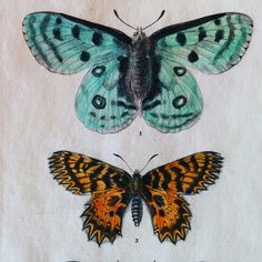 Love the old hand painted colours.  http://www.finerareprints.com/animals-antique-prints/butterfly-antique-prints
