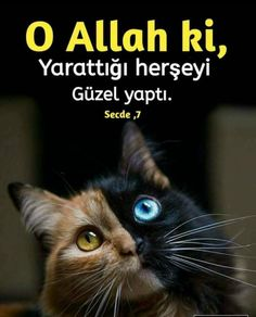 Allah Islam, Islam Quran, Hafiz, Cool Words, Cool Pictures, Pray, Religion, Amen, Faith