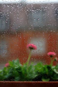 """this morning"" ~ urban nature"