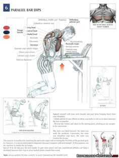 Training Anatomy - Chest - Parallel Bar Dips