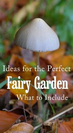What Is Included in the Perfect Fairy Garden? A Fairy Perspective, from Sarah at Earth Energy Healings. What does the perfect fairy garden look like, to a fairy? Do you need tiny mushroom statues and glitter fence posts, after all? Fairy Gardens, ideas for fairy gardens, what to include in fairy gardens, perfect fairy garden