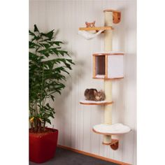 Price search results for Kerbl Dolomit Cat Tree Medium Cat Room, Cat Tree, Cat Furniture, Dogs Of The World, Free Uk, Pet Shop, Pets, Smaller Homes, Projects