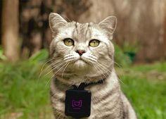Castacam – L'appareil photo pour chat !