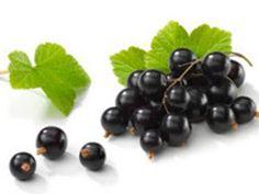Info TeknologiKiwi Blackcurrant dapat mengurangi kelelahan mental  Sebuah studi oleh Plant & Food Research, salah satu New Zealand's crown research institute, telah menunjukkan bahwa ekstrak blackcurrant yang berasal