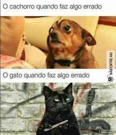 Gatos vao dominar o mundo Animals And Pets, Funny Animals, Cute Animals, Sao Memes, Funny Memes, Cool Pets, Cute Dogs, Otaku Meme, Ex Machina