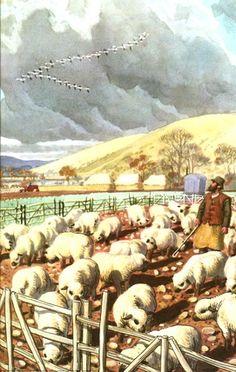Sheep pen. C. F. Tunnicliffe