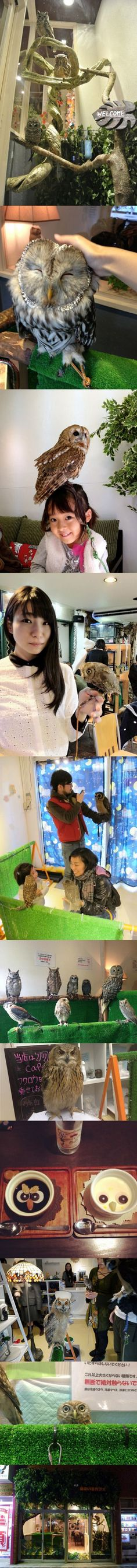 Owl Cafe in Japan  I've never really thought about traveling to Japan but now it's my life mission.