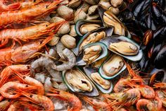 Can Cats Eat Lobster, Oyster, Mussels and other Shellfish? Seafood Market, Seafood Restaurant, Canadian Lobster, Foods For Migraines, Mercury Poisoning, Sushi Menu, Arctic Char, Sustainable Seafood, Rockfish