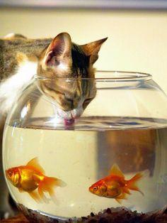Durst stillen bei den Fischen