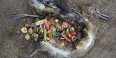 petitie: Push PepsiCo to make NEW ONE PIECE BOTTLES so that their plastic bottletops CAN'T end up in marine animals' stomachs!
