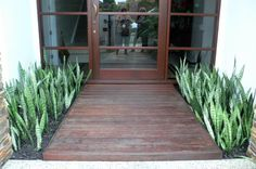 This front entrance had a broken water feature each side of the path. Fusion Landscape Design broke up water feature and replaced them with  shallow gardens mass planted with Sansevieria trifasciata (mother-in-laws tongue). The gardens are 2 mts x 1mt. www.fusionlandsca...