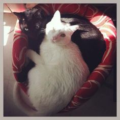 Els 400 Gats                                                                : Desmontando el mito de la inmunodeficiencia felina...