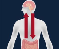 Parkinson's May Begin in Gut Before Affecting the Brain